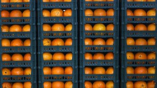 افزایش ۳۴ درصدی عرضه میوه شب عید/ فروش میوه شب عید در ۱۵۰۰ مرکز عرضه دولتی