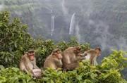 عکس | تیمارکردن میمونها در عکس روز نشنال جئوگرافیک