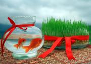 مردم سبزه و ماهی قرمز را در آبهای آزاد رهاسازی نکنند