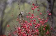 تصاویر | شکوفههای بهاری در مشهد