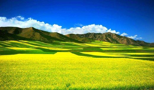 فصل بهار در استان چینگهای چین