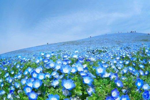 فصل بهار در استان ایباراکی ژاپن
