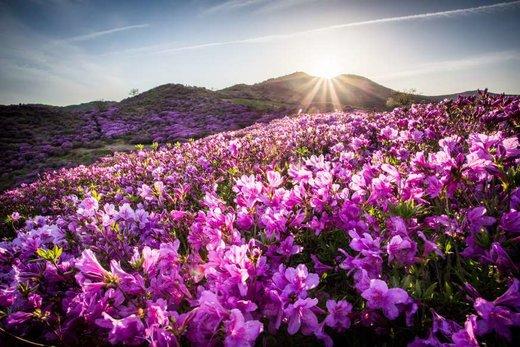فصل بهار در کره جنوبی