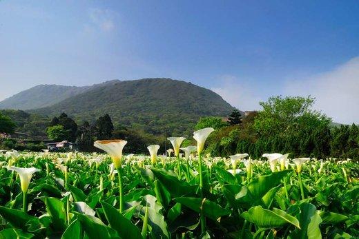 فصل بهار در پارک ملی تایوان