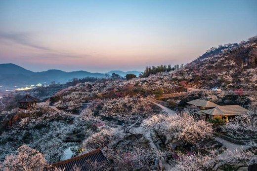 فصل بهار در شهر گوانگیانگ کرهجنوبی