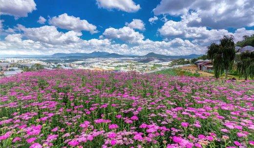 فصل بهار در دا لات ویتنام