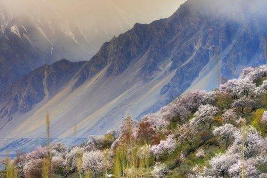فصل بهار در دره هنزه پاکستان