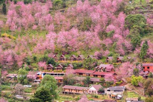 فصل بهار در چیانگ مای تایلند