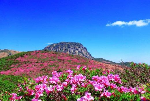 فصل بهار در جزیره ججودو کره جنوبی