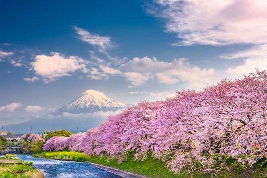 فصل بهار در کوه فوجی ژاپن