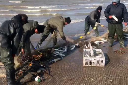 فیلم   لحظات دیدنی صید نوروزی از دریای خرز با حضور مسافران