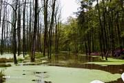 تصاویر | طبیعت بهاری و مرطوب گیلان