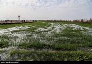 سیلاب بالغ بر ۵۰۰ میلیارد تومان به اراضی زراعی و باغی مازندران خسارت وارد کرد