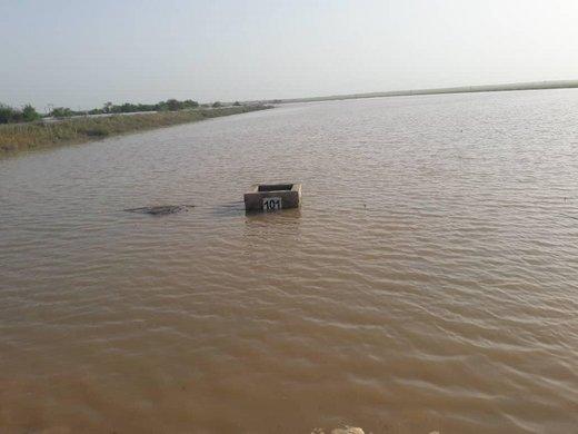 مزارع کشت و صنعت نیشکر امام خمینی (ره) خوزستان زیرسیلاب رفت