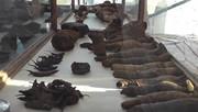 کشف اجساد مومیاییشده پرندگان و حیوانات در مقبره ۲۰۰۰ ساله در مصر