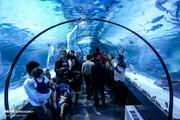 تصاویر | تونل آکواریوم ۳۵ متری اصفهان