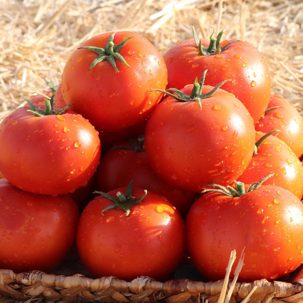 افزایش قیمت گوجه فرنگی سال ۹۸