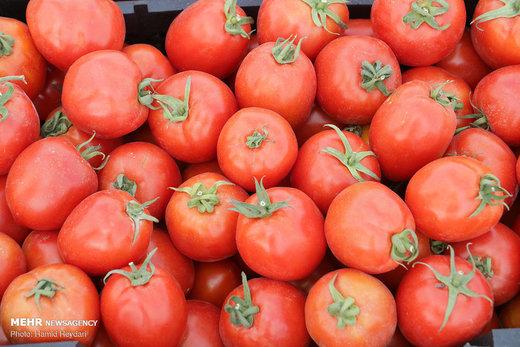 گوجهفرنگی دوباره گران شد