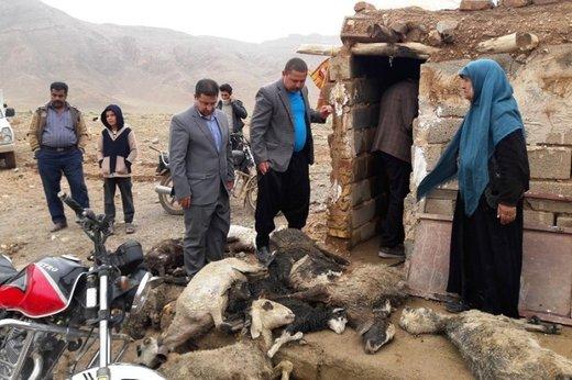 جمعآوری لاشه حیوانات در برخی مناطق سیلزده مقدور نیست
