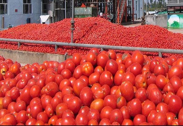 رفت و برگشت قیمت گوجه فرنگی در بازار