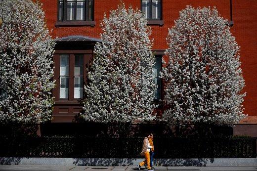 شکوفه های بهاری در واشینگتن، دی.سی