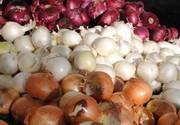 قاچاق پیاز زیرپوشش صادرات گوجه