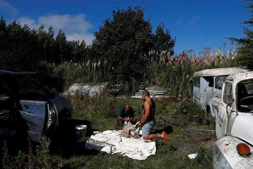 یک شهروند افغانی مقیم نیوزیلند با دوستش برای پدرش که در حادثه تیراندازی در مساجد شهر کرایستچرچ این کشور کشته شده، گوسفند قربانی میکند