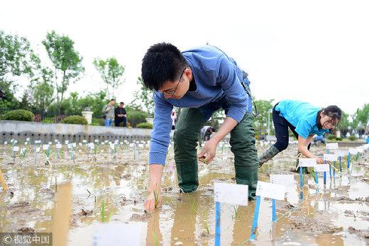 زمزمه واردات برنج به بهانه آسیب سیل