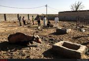نامه ۱۱۵ استاد دانشگاه به روحانی برای نجات خوزستان و «هورالعظیم»