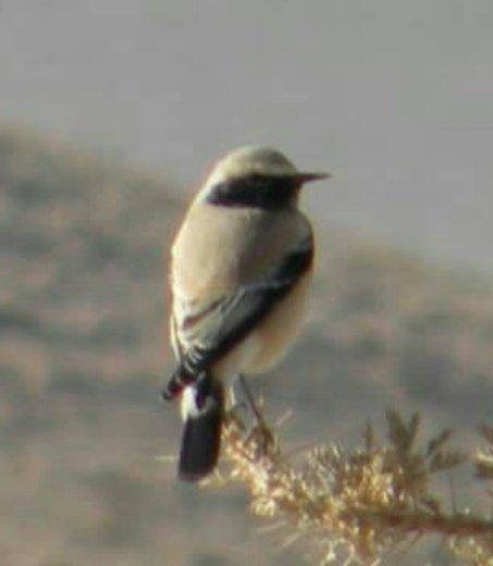 مشاهده ۵ گونه جدید پرنده در چهارمحال و بختیاری
