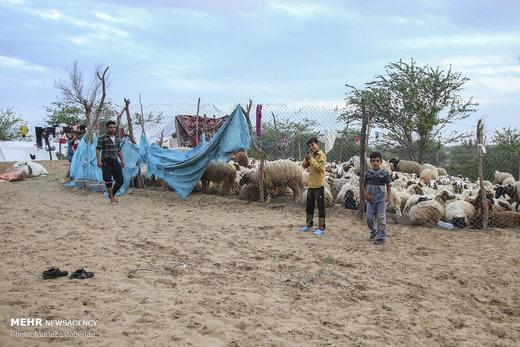 تلفات سنگین مرغداریها در دشت آزادگان به دلیل سیلاب