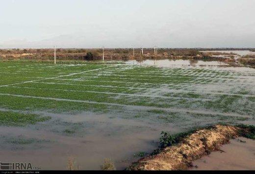 خسارت ۴۳۲ میلیارد ریالی سیل به اراضی کشاورزی آذربایجانغربی