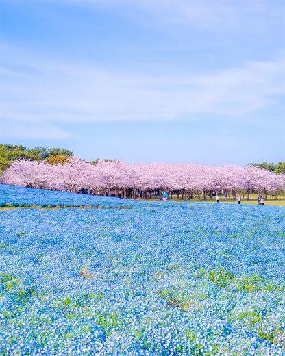 پارک ملی «یومینوناکامیچی» ژاپن