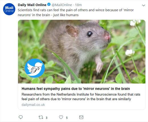 موشها مانند انسان درد در دیگران را حس میکنند