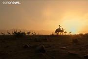 فیلم | شکار کُلنگ در افغانستان!