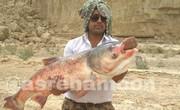 عکس | ماهی ۲۰ کیلویی، هدیه باران به صیاد سیستان و بلوچستانی