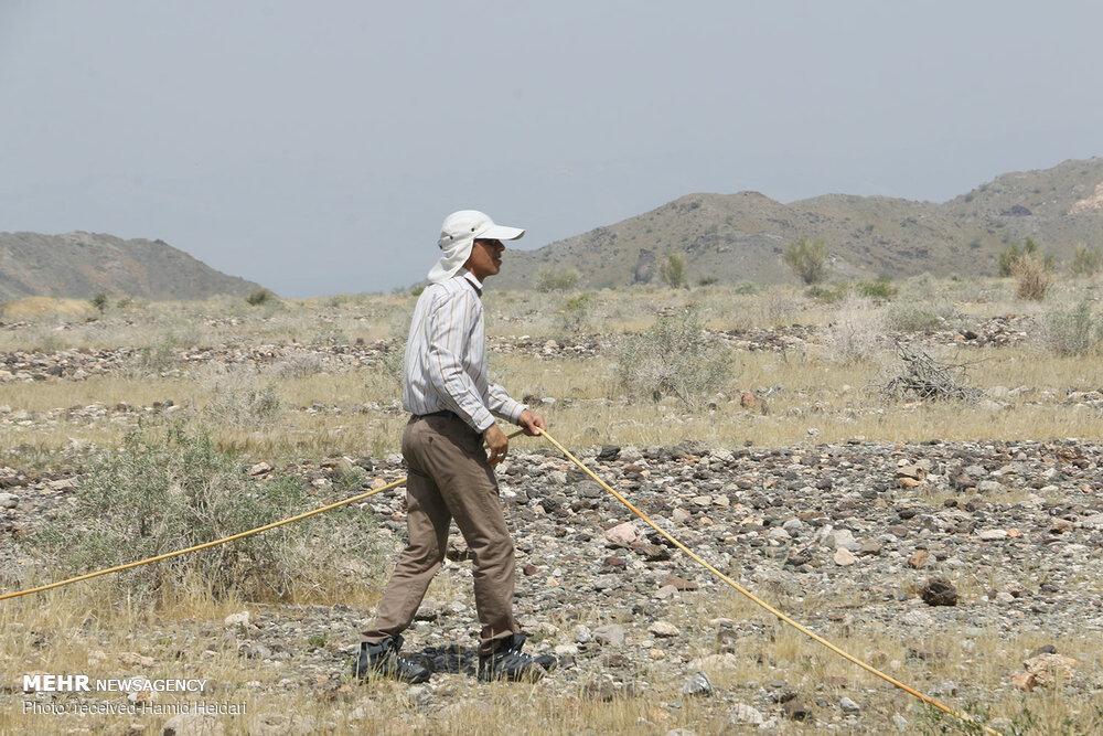 ملخهای صحرایی در راه کیش - 5