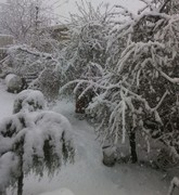 بارش برف در سی و سومین روز بهار در ارومیه