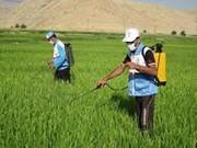 استقرار۲۰ اکیپ مبارزه با آفت ملخ در مزارع چهارمحالوبختیاری