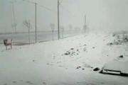 فیلم | بارش برف زنجان را هم سفیدپوش کرد!
