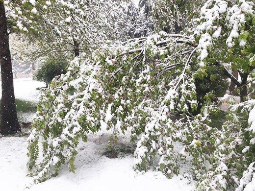 شاخههایی که بجای میوه، شکستند