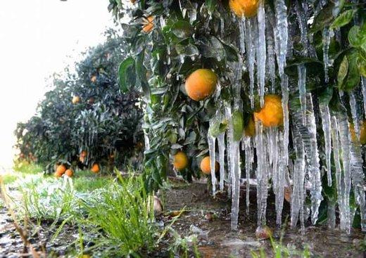 احتمال یخزدگی محصولات کشاورزی