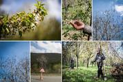 هشدار جهاد کشاورزی آذربایجان شرقی درباره خسارات سرمای دیررس