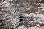 آیا بهار در همه جای دنیا، همین رنگ است؟ + تصاویر مستند