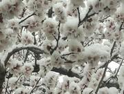دمای هوای همدان به منفی ۵ درجه خواهد رسید/ بارش برف در مناطق شمالی استان