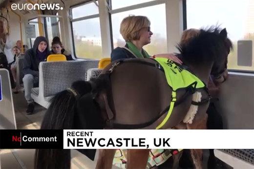 فیلم | کره اسبی که صاحب کمبینایش را سوار مترو میکند