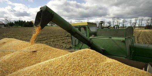قیمت گندم برای مصارف صنعتی مشخص شد