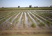 سیلابهای اخیر با کشاورزان چه کرد؟