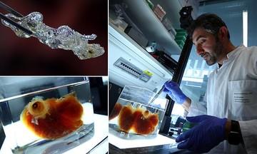 ساخت اعضای بدن انسان توسط محققان در آلمان برای پیوند کلیه