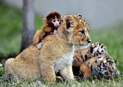 عجیبترین تصاویر از همزیستیهای حیوانات